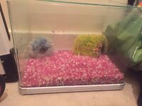 Large glass fish tank and extras