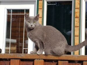 Outside Adult Cats To Re-home