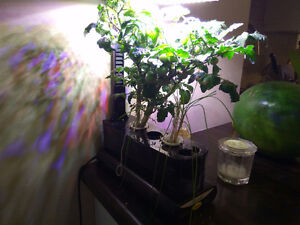 Miracle-Gro AeroGarden Sprout
