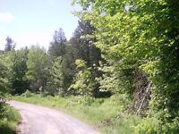 Magnifiques terrains boisés à vendre