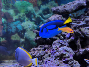 ***Saltwater Fish For SALE***