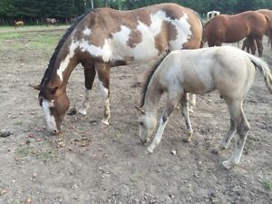 Registered paint mare and colt