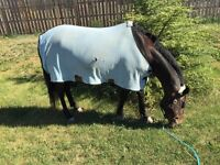 10 year old Warmblood mare for 1/2 lease!