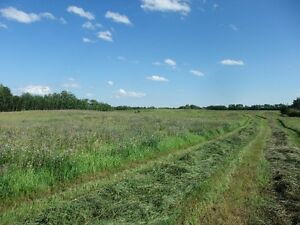 78.2 ACRES OF OPEN LAND