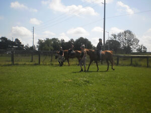Hands-On Everything Horse Learning (starts kids 4+yrs old) London Ontario image 3
