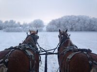 Sleigh Rides / Wagon Rides w/Lunch and Dessert
