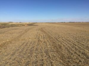 LOTS OF POTENTIAL! Half Section East of Calgary