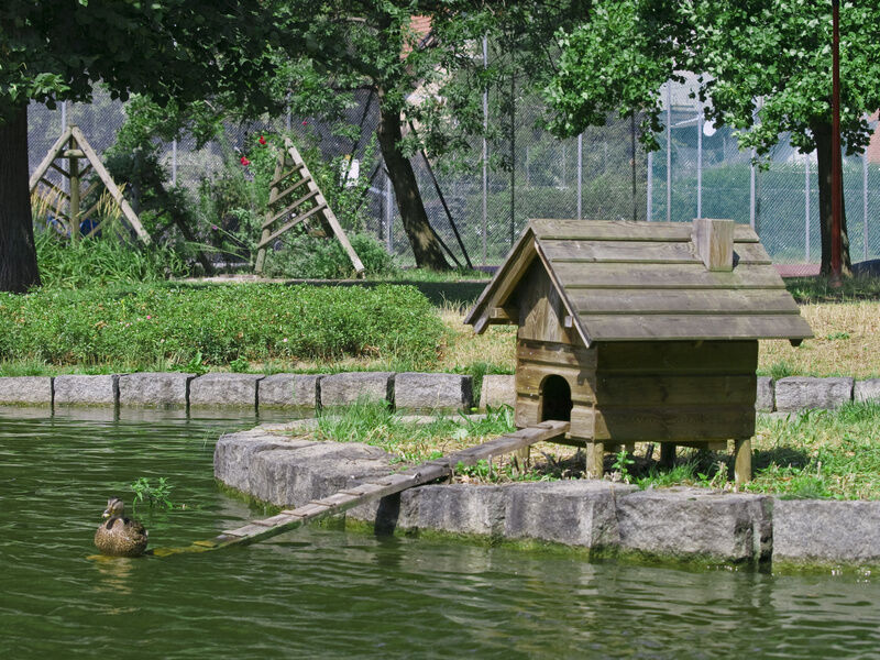 Top 3 accessories for keeping ducks ebay for Building a duck house shelter