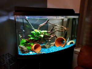 50 G fish tank with stand and canister filter