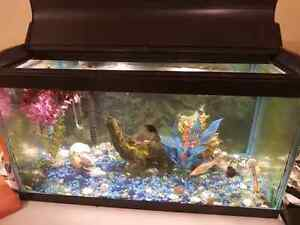 Fish tank package for sale