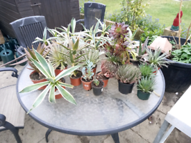Various plants collection only hersham surrey £10 each