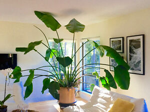 Plants Buy Or Sell Indoor Home Items In British Columbia