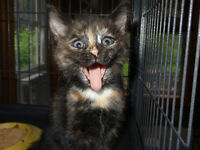 WE HAVE SEVERAL KITTENS AND ADULT CATS FOR ADOPTION!!