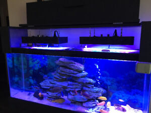 55 Gallon complete with salt water gear