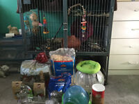 Chinchilla with cage and more!! Need gone ASAP