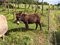 Free Jack Donkey