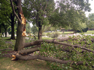 Storm Cleanup, Tree Cleanup, and Debris Removal