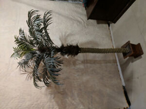 Palm Trees (two available)