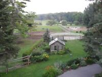 Horse Farm and/or 2 Bedroom Apartment Available for Rent