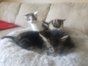 Kittens-Ready to go.