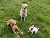 Glenmoor Doggy Daycare and Home Boarding