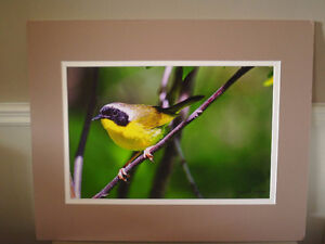 Signed Photo - Campbell Hastings- Beautiful Colours