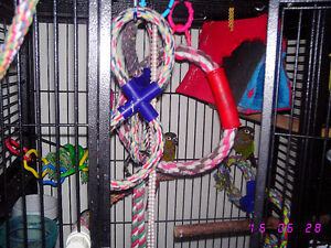 Two Green Cheek Conures with Large Cage Stratford Kitchener Area image 7
