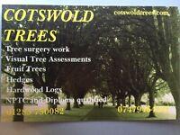 Tree surgery tree surgeons