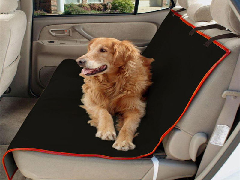 Your Guide to Pet-Friendly Boot Liners