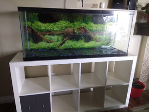 55 and 25 gallons fish tank with filter and heater
