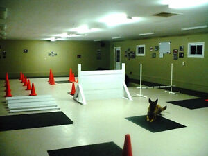 Dog Training-Basic Obedience Classes Starting Sept 24th!