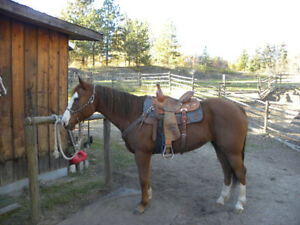 9 year old paint mare (Breeding stock)