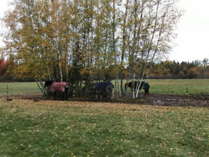Introduction to horses for emotional healing classes