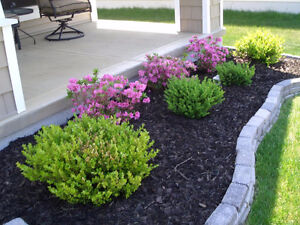 Landscaping: Mulching, Planting, Tree removal, we do it all ! Cambridge Kitchener Area image 2