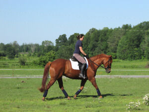 6 yrs old qh mare for sale.