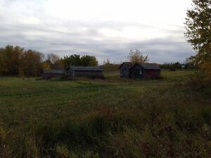 Wildlife, Grain quarter, NE of Norquay - Forest fringe, Regina Regina Area image 1
