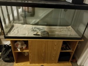 75 gallon aquarium and stand used for reptile
