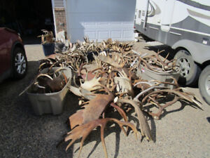 Paying Cash for Antler Sheds