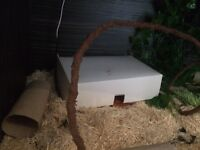Corn Snakes and Set Up