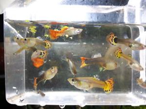 Aquarium fish snails shrimp plants live food and more