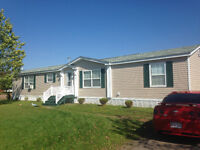 Pine Tree / Great Condition! / All Appliances Inc.