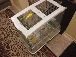 Two Beautiful And Healthy Budgie Birds With Cage For Sale