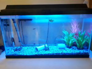 45 gallon fish tank & 5 fish