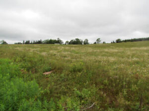 125 Acres in Pictou County, NS