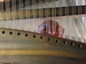 Piano Inspections