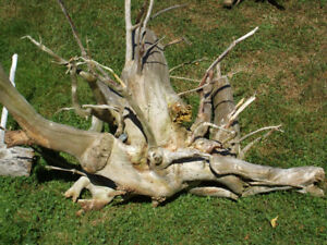 Saltwater Driftwood for sale