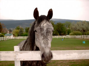 Retired or Special Needs Horse Boarding