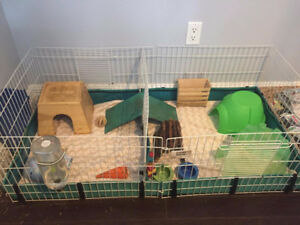 4 Guinea Pigs and Midwest Guinea Pig cage with roof top.