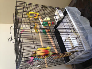 Parrot for sale London Ontario image 1