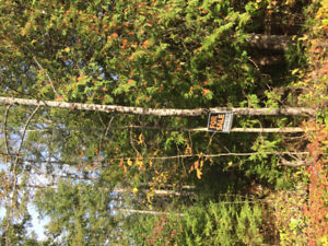 Lot for Sale in Marmora, On